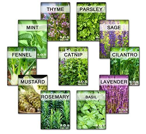 3175++ Seeds Super Herb Bulk 11 Varieties Peppermint, Rosemary, Lavender, Thyme (11 Varieties)
