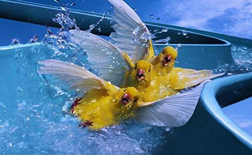 Yqgdss Tres Pájaros Canarios Jugando En El Agua Animal Educativo 200 Piezas Rompecabezas Juego De Desafío para Niños Cada Pieza Es Tecnología Única