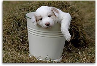 Premium - Lienzo (120 x 80 cm, horizontal, diseño de cachorro de Border Collie en cubo, imagen sobre bastidor, lienzo auténtico, impresión sobre lienzo, diseño de animales Calvendo