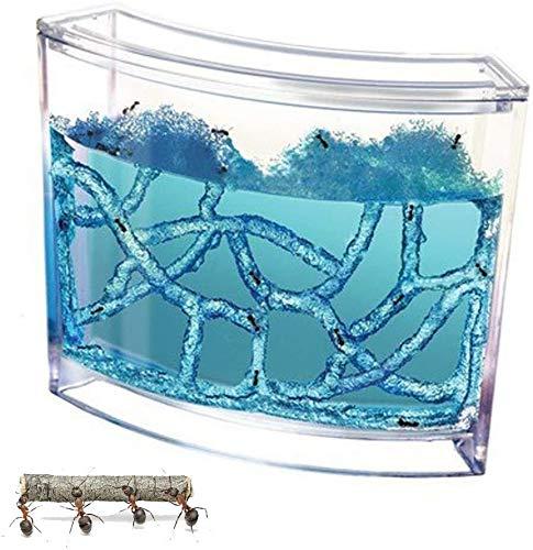 ZRBD-xh Villa Pet para Hormigas domésticas,con área de visualización de Laberinto de Gel translúcido para Hormigas domésticas Taller de Hormigas Nido de Hormigas Juguete Educativo de Ciencia