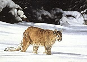Charles Frace - American Cougar Open Edition on Paper