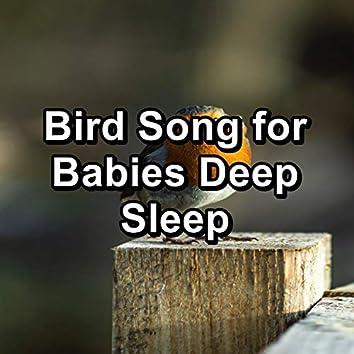 Bird Song for Babies Deep Sleep
