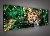 FORWALL Bilder Canvas Jaguar im bunten Dschungel O3 (45cm.