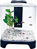 Penn Plax Betta Fish Tank Aquarium Kit with LED Light & Internal...