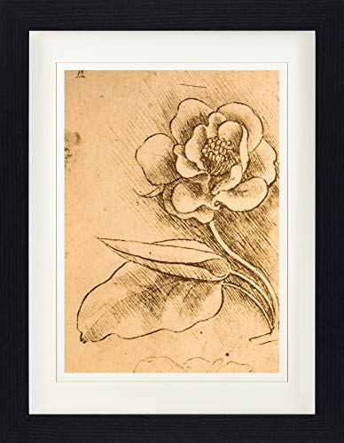 1art1 Leonardo Da Vinci - Blumenstudie, Detail, 1481-1483 Gerahmtes Bild Mit Edlem Passepartout | Wand-Bilder | Kunstdruck Poster Im Bilderrahmen 40 x 30 cm