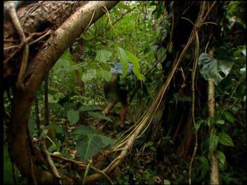 Costa Rica: The Arribiatta