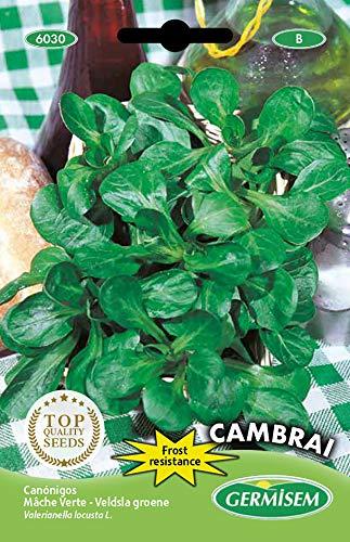 Germisem Feldsalat DE CAMBRAI, mehrfarbig, EC6030