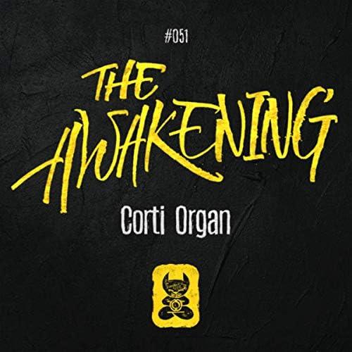 Corti Organ