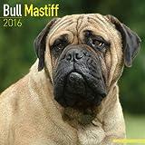 2016 bull mastiff dog calendar