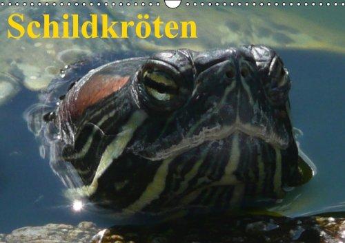 Schildkröten (Wandkalender immerwährend DIN A3 quer)