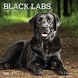 Black Labrador Retrievers - Schwarze Labradore 2020 - 16-Monatskalender mit freier DogDays-App: Original BrownTrout-Kalender [Mehrsprachig] [Kalender] (Wall-Kalender)