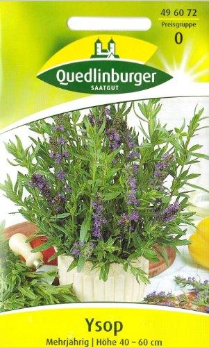 Quedlinburger Ysop mehrjährig, 1 Tüte Samen