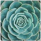 BONRI Set di 4 tovaglioli di Stoffa vegetale succulenta Cactus tovaglioli in Poliestere Lavabile 20'x 20' per Tavolo da Pranzo Festa di Matrimonio Vacanze Autunnali-Multicolore-1