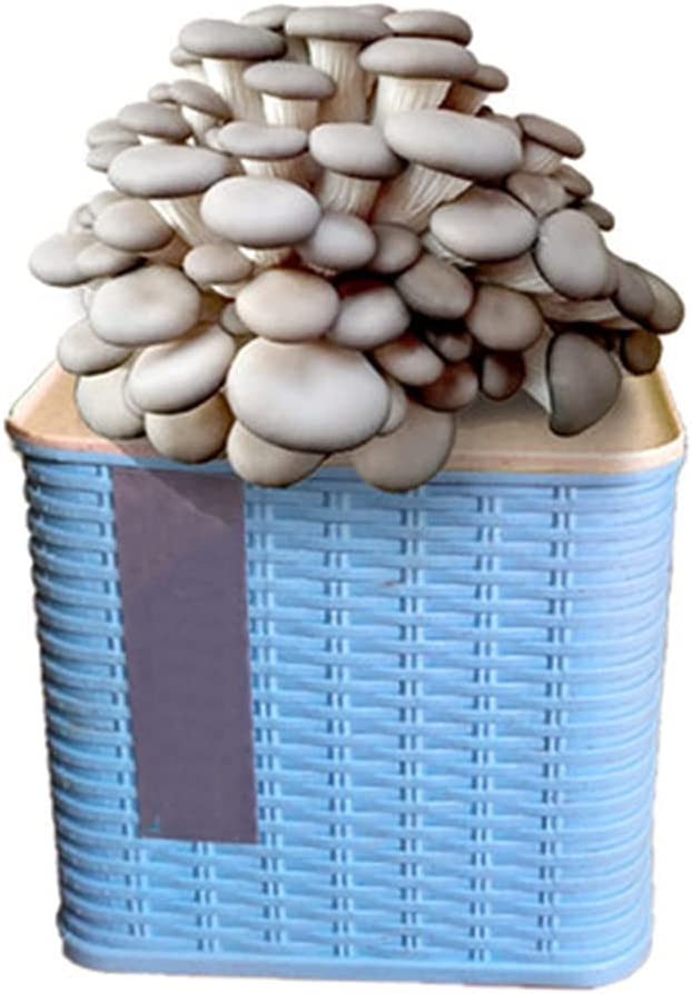 New sales XIAOXIA Ornamental Edible Ranking TOP17 Mushroom Mushrooms