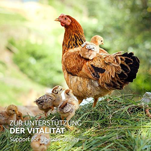 AniForte Wurm-Formel 50 g- Naturprodukt für Hühner, Gänse und Grossvögel - 6