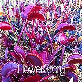 ASTONISH SEEDS: Semillas 1000 PC/paquete planta en maceta ivorous Dionaea Clip Semillas del atrapamoscas de Venus de la pl...