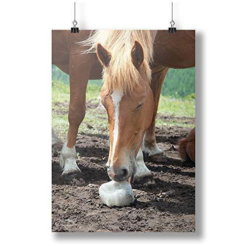INNOGLEN Horse Licks Salt in The Altai Mountains Photo Animal A0 A1 A2 A3 A4 Satin Photo Poster p10783h