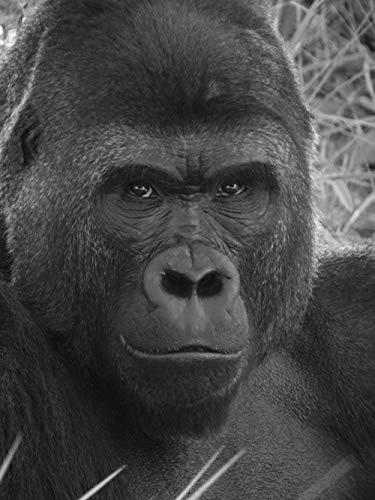 YHHAW Patrón de Gorila Negro Puzzle,Puzzles para Adultos,Rompecabezas,Puzzle 1000 Piezas