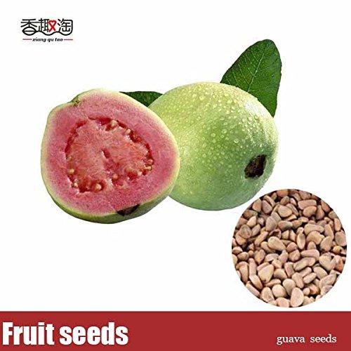 Graines, Goyave 50pcs graines d'arbres fruitiers tropicaux