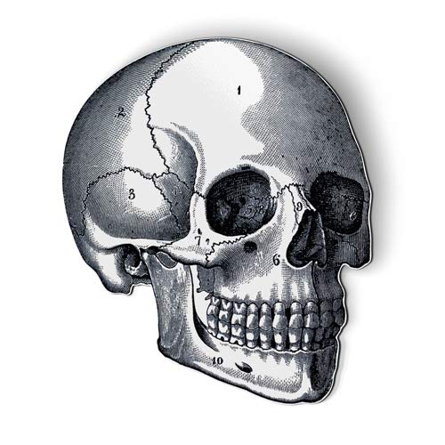 AK Wall Art Anatomy Skull Vintage - Magnet - Car Fridge Locker - Select Size