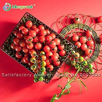 Nouveau Graines fraîches de tomate semences de tomate arbre Graines Tomate plantules 100PCS