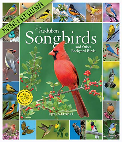 Audubon Songbirds and Other Backyard Birds Picture-A-Day Wall Calendar 2020