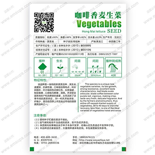 Original emballé café feuille graines de laitue laitue biji lactuca parfumée sativa Hong Mai laitue, bonsaï graines de légumes - 30 pcs