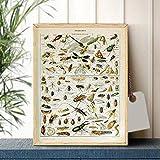 Ling88 Posters,Vintage Adolphe Millot Encyclopédie Affiches Impressions Papillon Fleurs Insecte Toile Peintures Mur Art Photo Décor À La Maison Cuadros_50X70 Cm