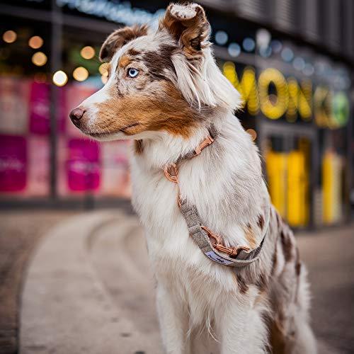 Freudentier Hundeleine (2m) + Hundehalsband im Set | Außergewöhnlich Elegant & Verstellbar - 4