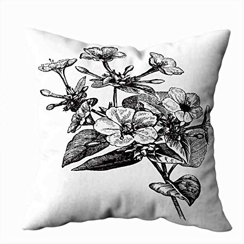 NIANPU Christmas Pillow Covers,Seasonal Four Clock Flower Marvel of Peru Vintage Engraving Old Engraved Plant or Mirabilis Jalapa a 18X18Inch for Sofa Home Decorative Pillowcase