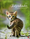 Katzenkinder Posterkalender. Wandkalender 2020. Monatskalendarium. Spiralbindung. Format 34 x 44 cm