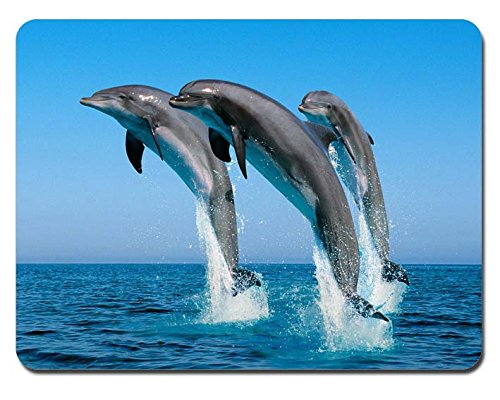RUBIN Dolphin Rectangular Gaming Mouse Pads Size:9.4' x7.9' RB140