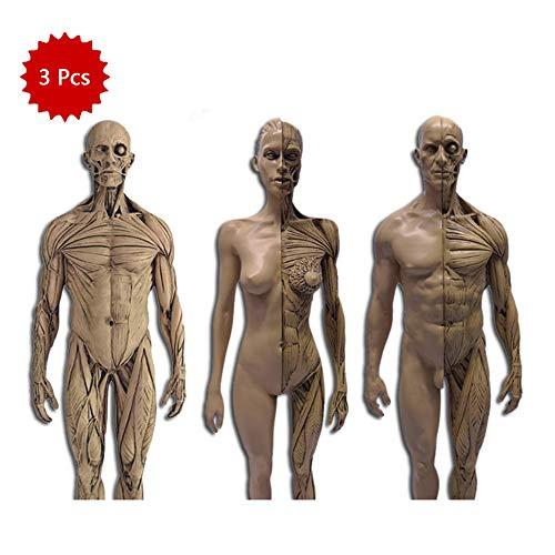 WJH 30CM Muscular Humana anatómica de la Cabeza del cráneo Anatomía Cuerpo Médico cráneo del Hueso Resina Modelo de Referencia Busto Pintura Arte Neutral (3 Piezas)