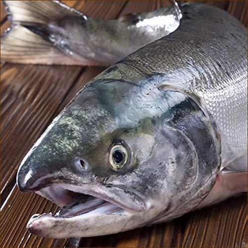 北海道産 生秋鮭 1尾 3.5kg(オス) 生 サケ シャケ 鮭 秋鮭 北海道 秋の味覚 グルメ お取り寄せ