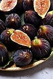 albero di Fico pianta di fico varietà Di Terlizzi in vaso Età 2 anni pianta di fichi vera venduta da eGarden.store