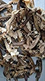 Real Coyote Jaw Bone Knife Handle Crafts Animal Bones Skull 4'-6' L (100 Pieces)