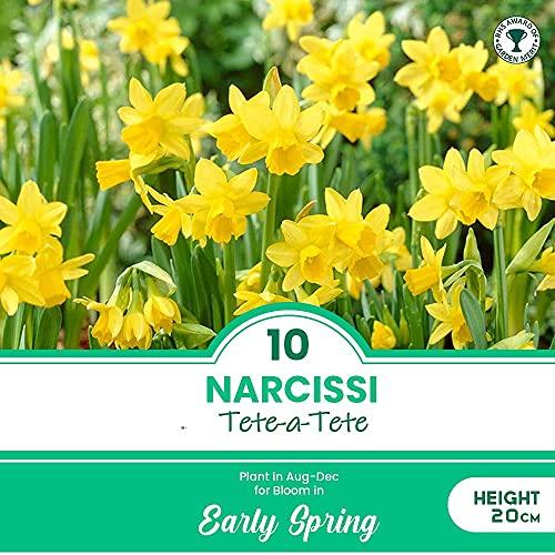 10 Narcissi Tete a Tete - RHS Award of Garden Merit - Spring Flowering Bulbs – Perennial -...