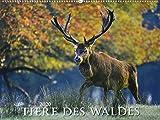 Tiere des Waldes 2020 - Bildkalender quer (56 x 42) - Tierkalender - Wald - Natur - Wandkalender - ALPHA EDITION