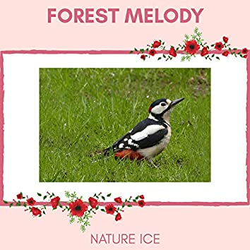 Forest Melody - Nature Ice