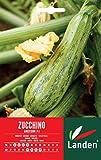 Landen Zucchino Greyzini F.1