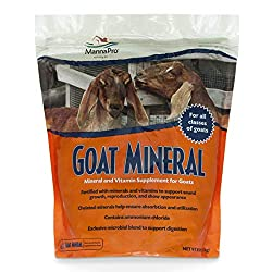 Loose minerals for goats, one of the 5 consumable items you need when you have goats.