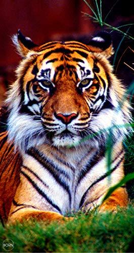 TEXTIL TARRAGO Toalla de Playa 90x170 cm 100% Algodon Tigre estampacion Digital fotografica THD01