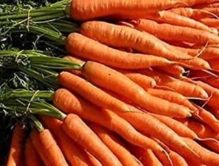 imperator carrot variety