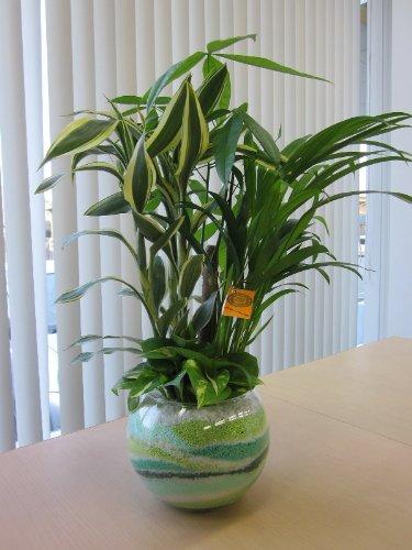 ハイドロカルチャー寄せ植え(カラーサンド)(グリーン)カラーサンドの観葉植物は、手作りだから世界にひとつだけの模様です。いろいろな場所に飾って楽しめます。また贈り物にも最適です。
