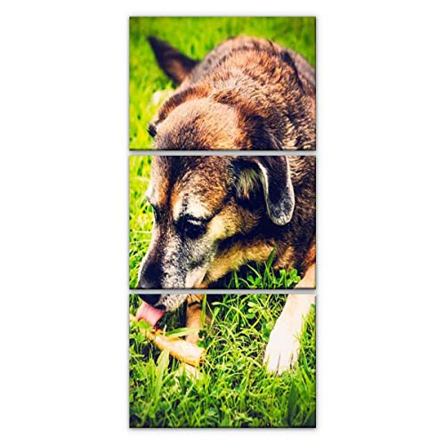 XEPPO1 3 Piece Wall Art Print On Canvas Mature Dog Licking Rawhide Treat Licks and Pictures Modern Abstract Picture Poster for Home Decor Stretched and Framed Ready to Hang