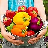 Qulista Samenhaus - 20pcs Samenmischung Gemüse-Paprika F1 bunt würzig-aromatisch großfruchtig dickfleischig Gemüse Samen Saatgut Bio winterhart mehrjährig