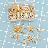 KERDEJAR Estrella de mar Natural, 1 Caja Estrella de mar Natural Concha Marina...