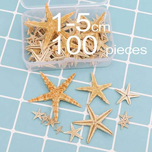 KERDEJAR Estrella de mar Natural, 1 Caja Estrella de mar Natural Concha Marina Artesanía de Playa Estrellas de mar Naturales DIY Decoración de Boda en la Playa Artesanía de Resina epoxi 1-5cm D #