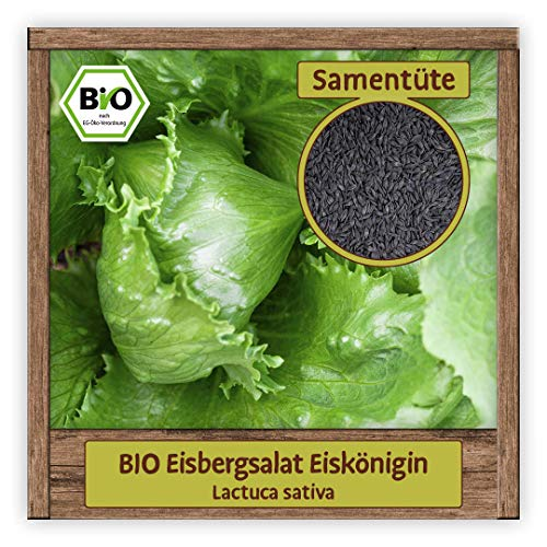 BIO Salat Samen Eisbergsalat Eisköngin Gemüse-Samen Wintersalat Eissalat winterhart