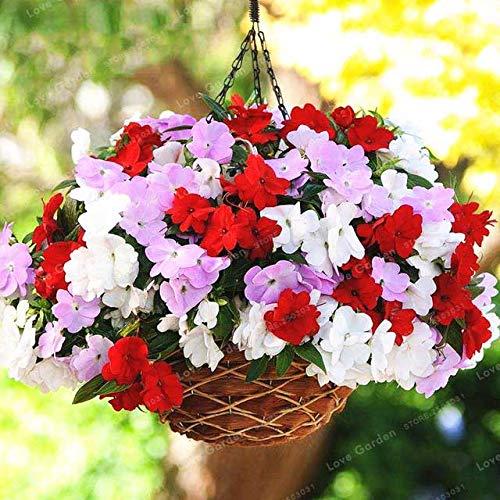 SANHOC 100pcs / Lot, Bunte Impatiens Vier Jahreszeiten seedsplants Gartenblume Pflanzen blühen Bonsais Topfpflanzen Bonsais Henna: 4